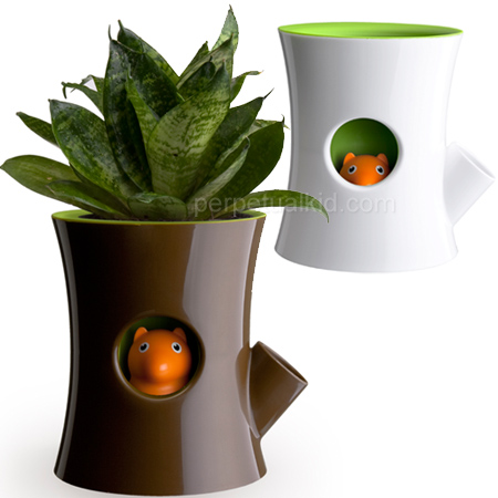cute squirrel plant pot